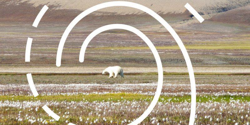 arktische-spirale_eisbaer_original_web_